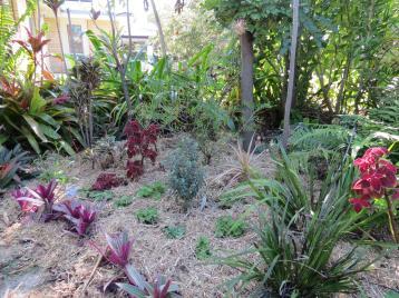 august garden 2 008_4000x3000
