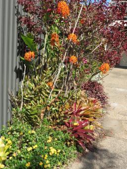 august garden 2 016_3000x4000