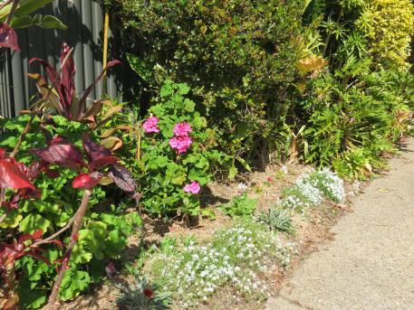 august garden 2 017_4000x3000
