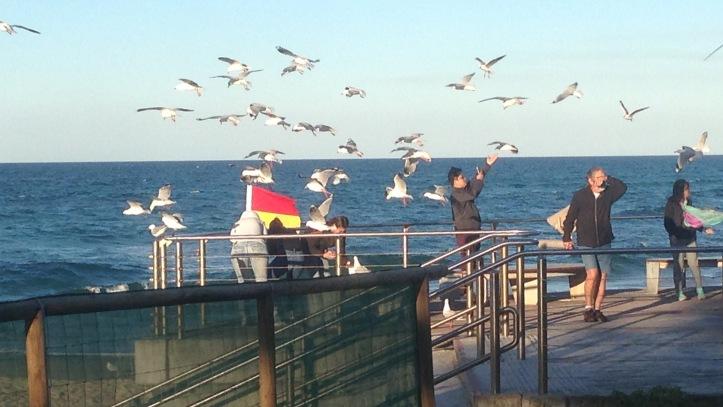 seagulls 005