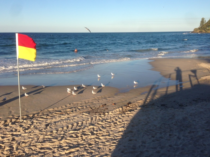 seagulls 018