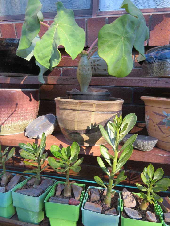 side garden (4 of 17)_3888x5184