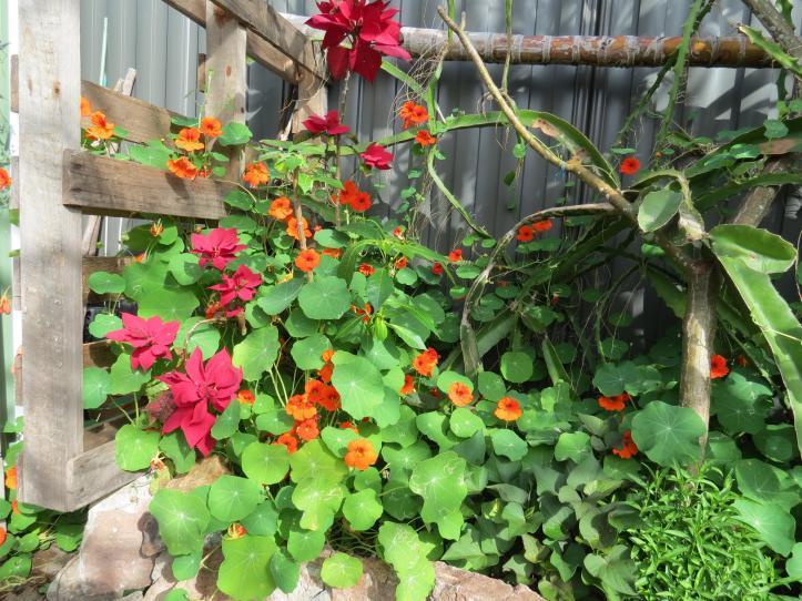 september garden 003_4000x3000