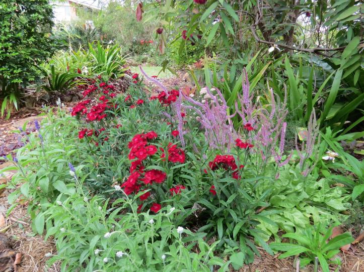 september garden 014_4000x3000