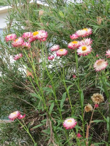 september garden 021_3000x4000