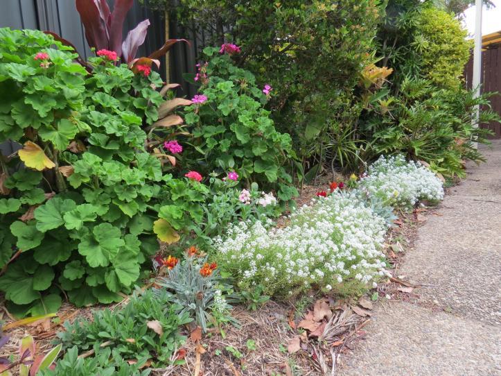 september garden 024_4000x3000