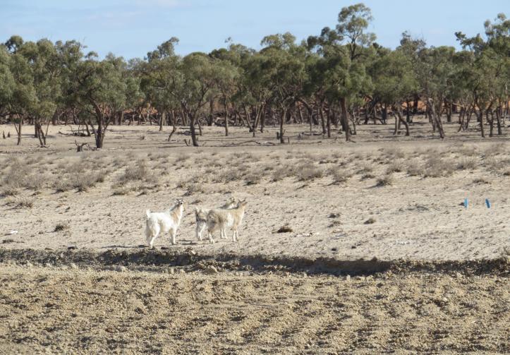 Broken Hill road trip 112_4907x3419