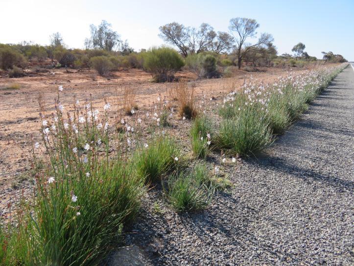 Broken Hill road trip 116_5184x3888