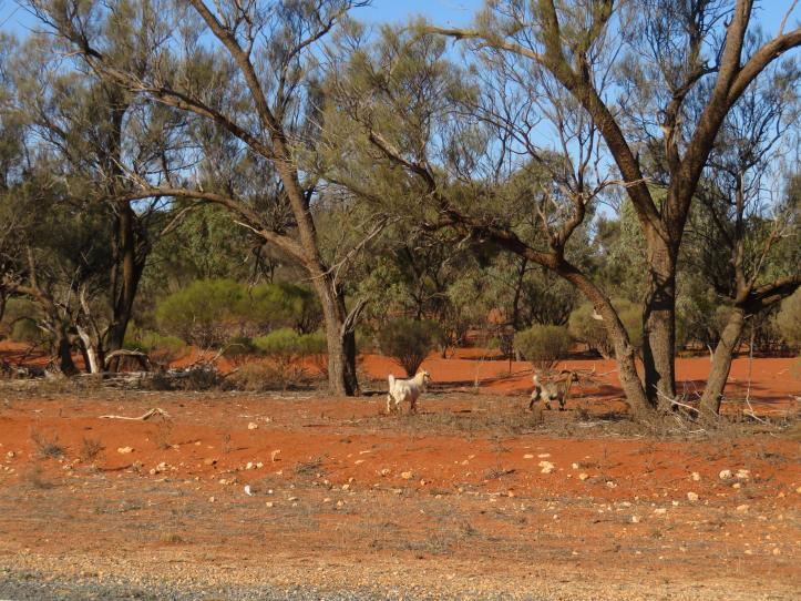 Broken Hill road trip 120_5184x3888