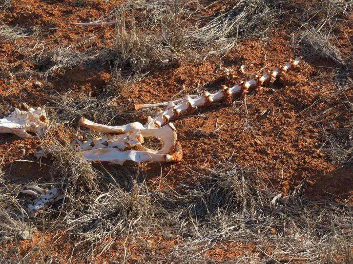 Broken Hill road trip 138_5184x3888