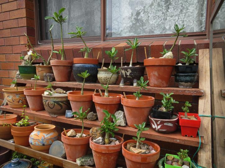 oct garden (11 of 35)_4000x3000