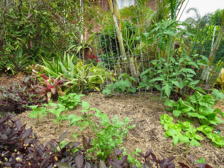 oct garden (16 of 35)_4000x3000