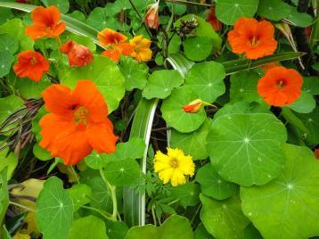 oct garden (19 of 35)_4000x3000