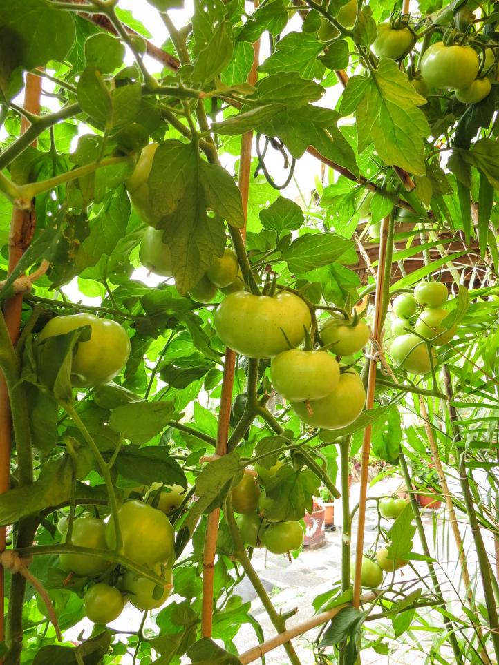 oct garden (28 of 35)_3000x4000