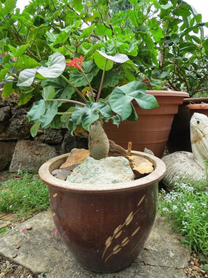 oct garden (30 of 35)_3000x4000