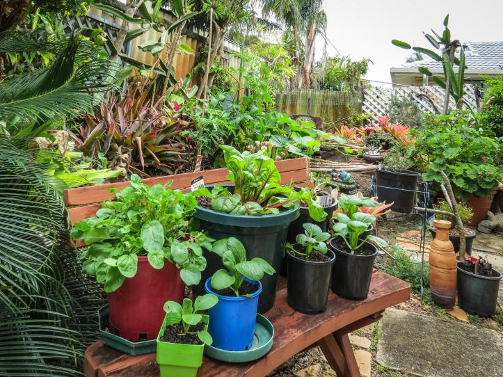 oct garden (7 of 35)_3589x2692