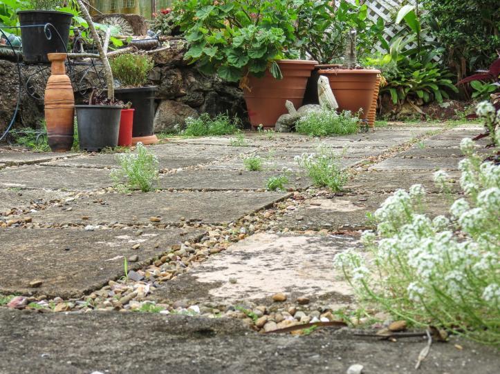 oct garden (8 of 35)_4000x3000