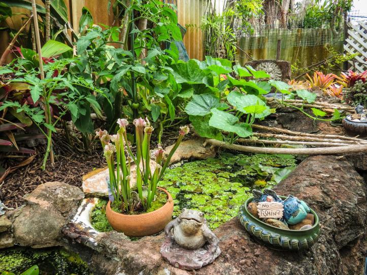 oct garden (9 of 35)_4000x3000