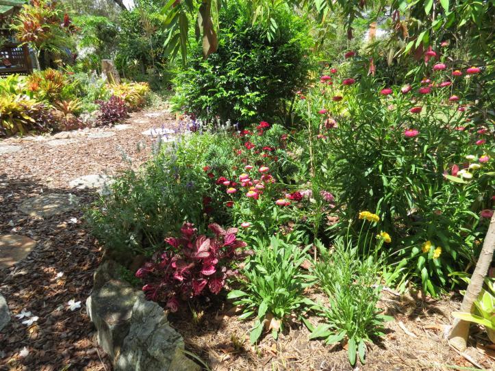 garden december 014_4000x3000