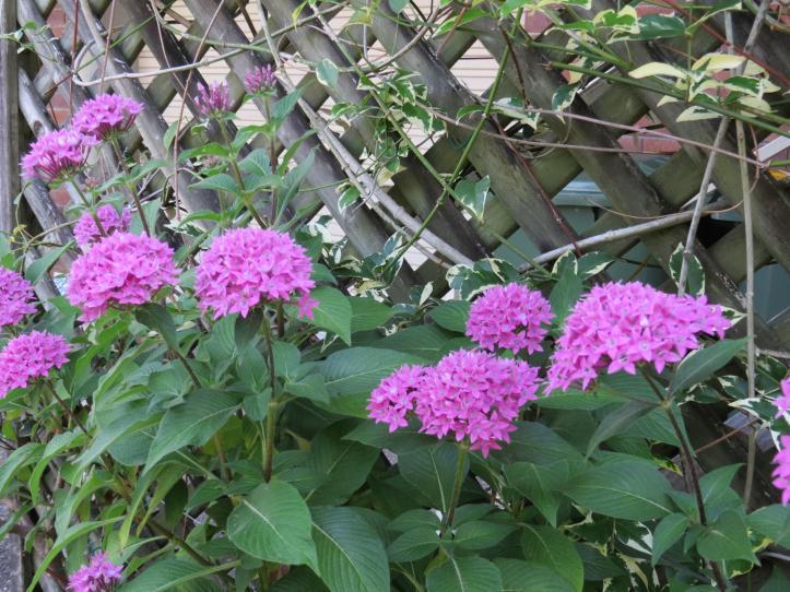 garden december 016_4000x3000