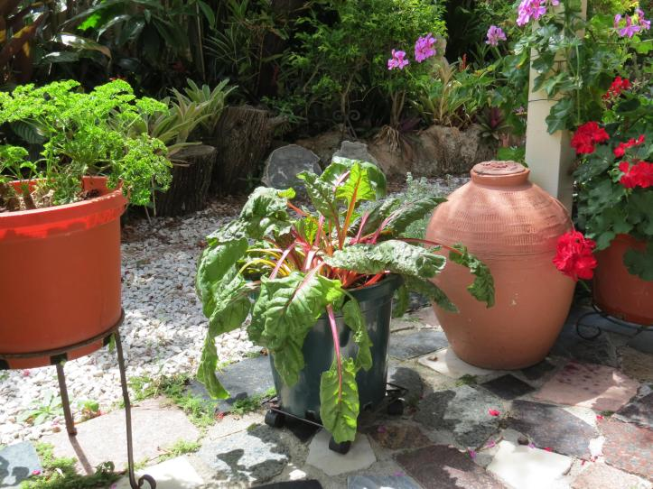 garden december 021_4000x3000