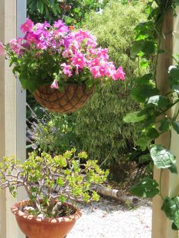 garden december 022_3000x4000