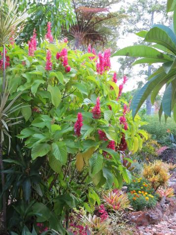 sunrise garden pc 206_3000x4000