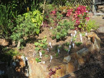 greenhouse garden front deck 010_5184x3888
