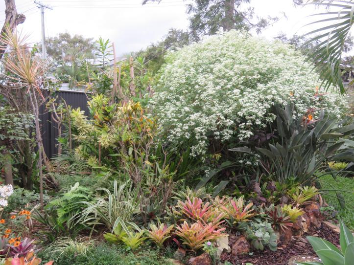 greenhouse garden front deck 027_5184x3888