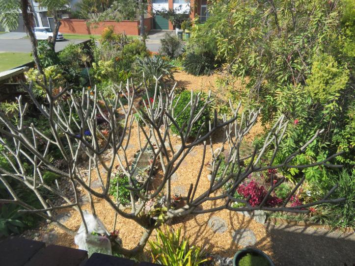 august garden birds 002_5184x3888
