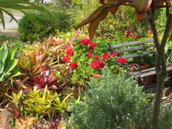august garden birds 026_5184x3888
