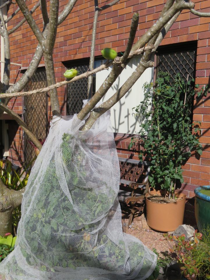 august garden birds 065_3888x5184