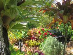 august garden birds 069_5184x3888