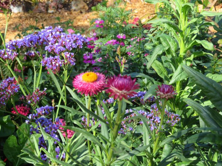 august garden birds 072_5184x3888