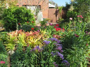 august garden birds 076_5184x3888