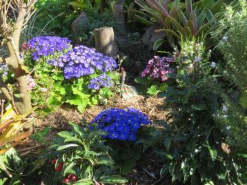 august garden birds 078_5184x3888