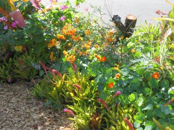 august garden birds 087_5184x3888