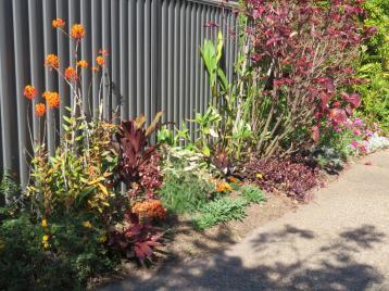 august garden birds 097_5184x3888