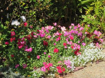 august garden birds 098_5184x3888