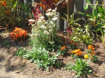 august garden birds 099_5184x3888