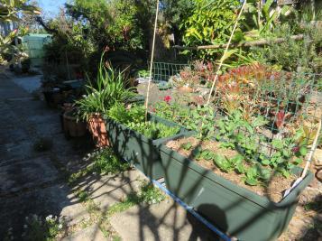 august garden birds 107_5184x3888