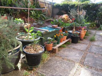 august garden birds 109_5184x3888