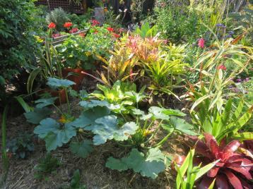 garden 002_5184x3888