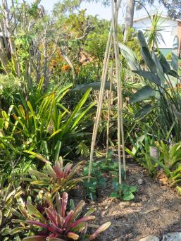 garden 006_3888x5184