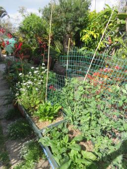 september changing seasons garden 008_3888x5184