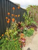 september changing seasons garden 031_3888x5184