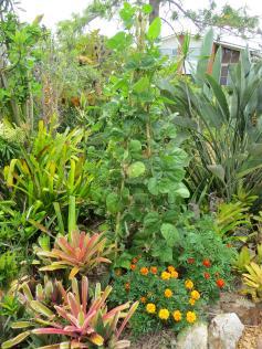garden28oct19 022_3000x4000