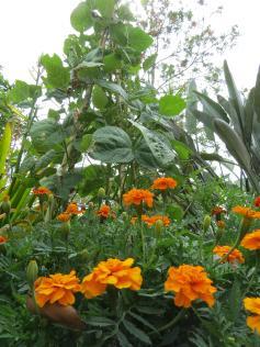 garden28oct19 023_3000x4000