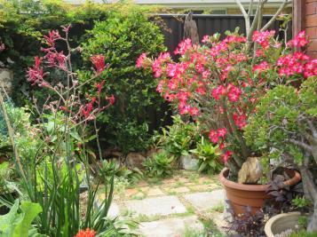 oct garden 010_5184x3888