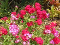 oct garden 024_5184x3888